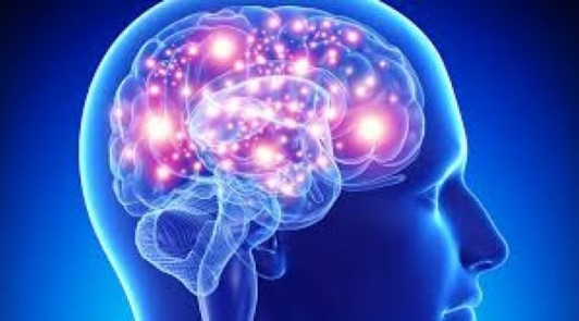 cervello-800x445